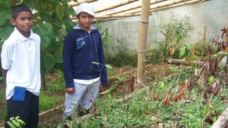Baumpflege als praxisnaher Umweltunterricht