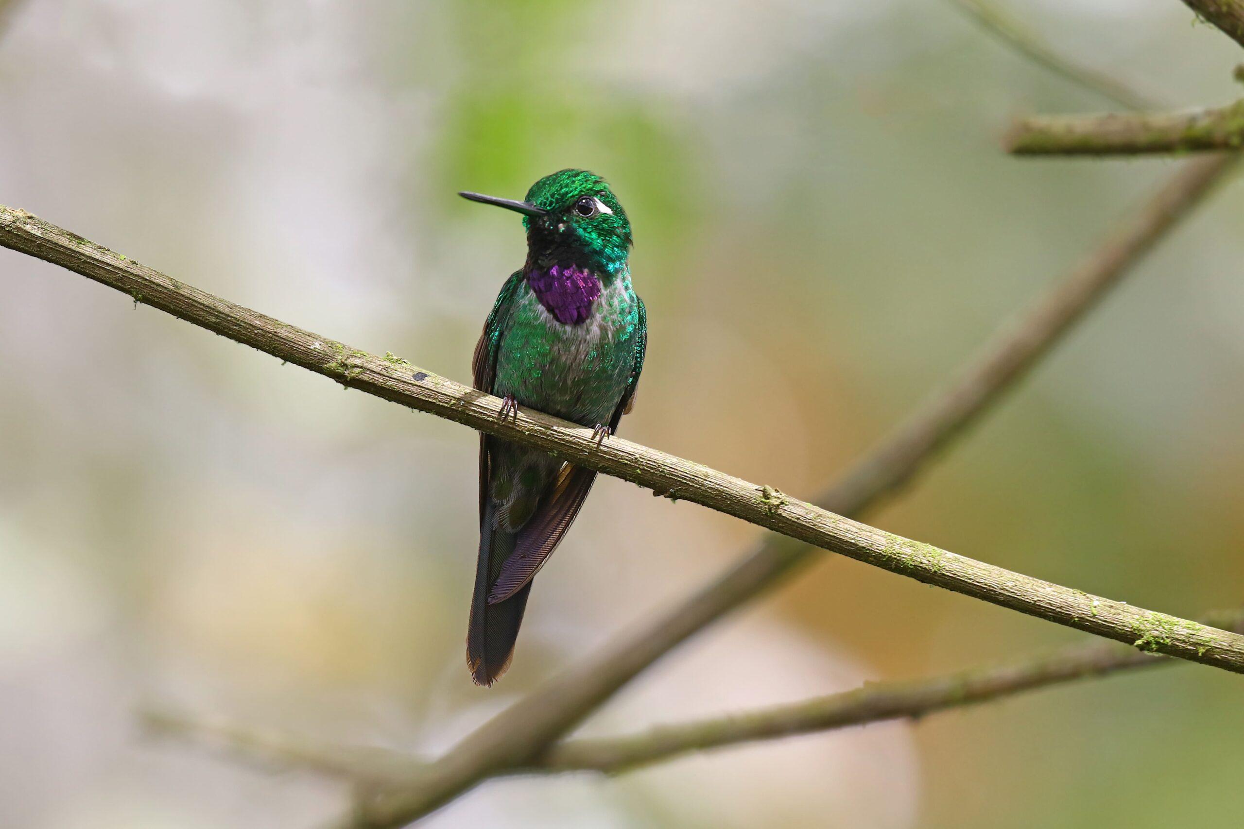 Neue Vogelarten bei der Vogelzählung